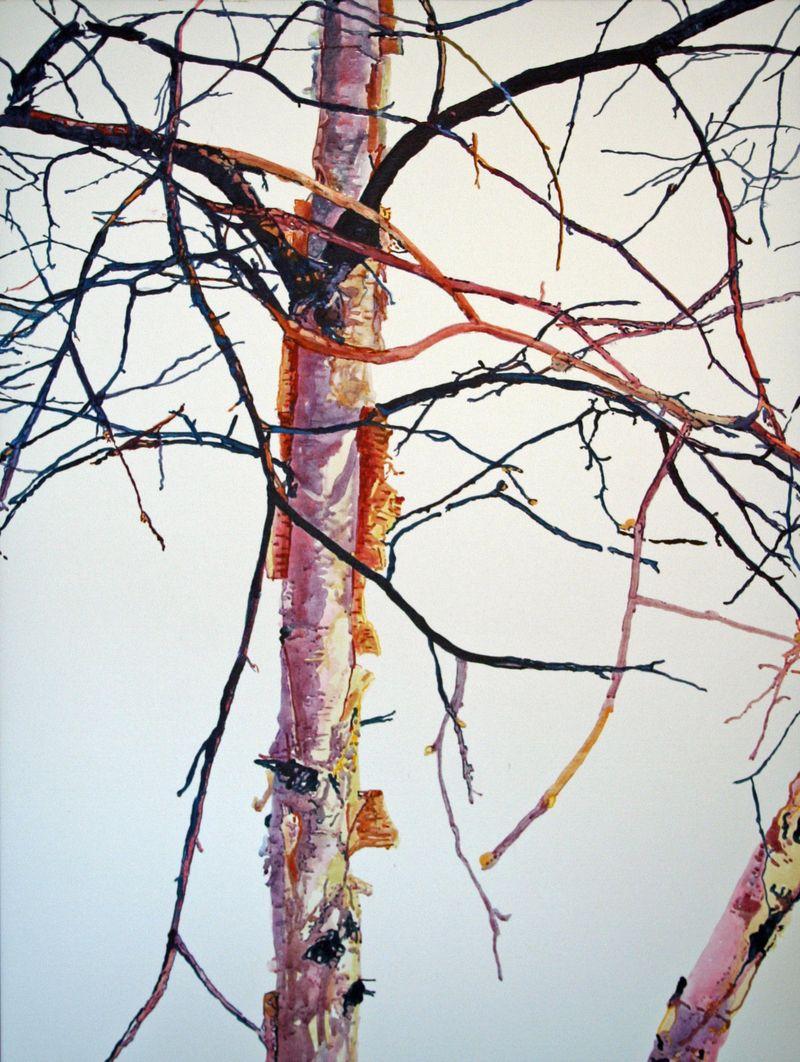 Lost Birch PITN
