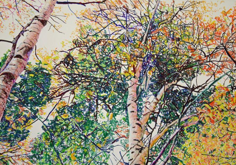 Birch Canopy