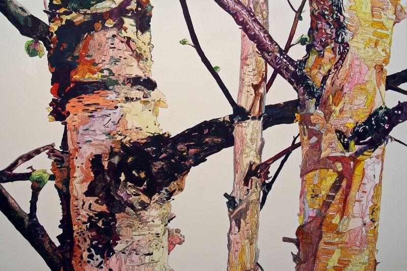 Birches Bare