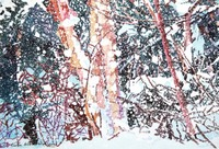 Deep_woods_snowfall_pitn